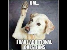 7d2cef2e4367905879e5f3b6284a4ad6--dog-humor-dog-memes